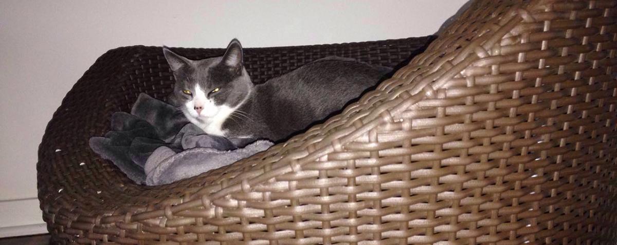Cat & Kitten Baskets