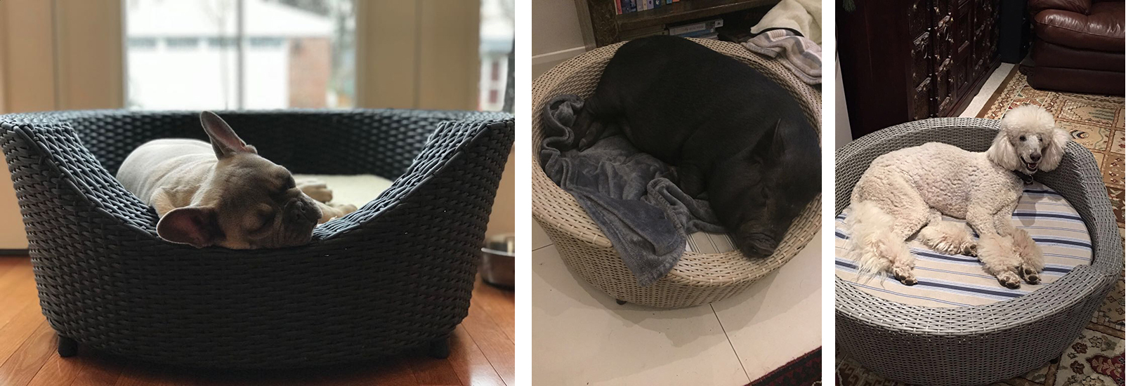 Dogs and their Baskets